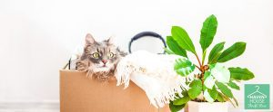 Best Thrift Store Finds for Your Pets